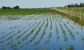La región de Los Bajos otra vez sufre intensas lluvias